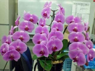 20070815_flower