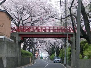 20070330_sakurazaka1