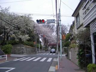 20070330_sakurazaka3