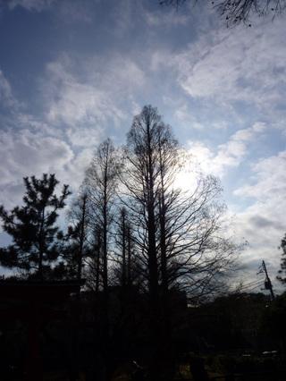 20100104_senzoku