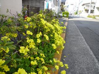 20100410_flower