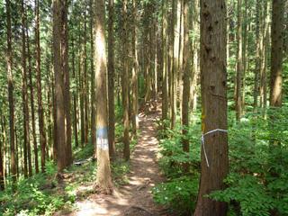 20100612_trail