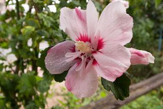 20110719_flower