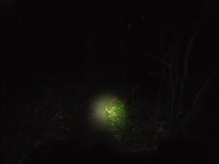 20121007_night